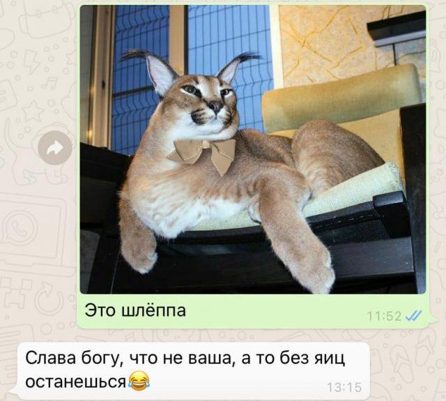 Большой Шлепа Русский кот