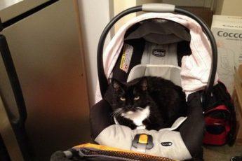 Кот задушил младенца в коляске во сне на Украине