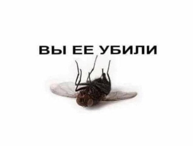 Lil Yush - В Саратове умерла муха